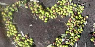 Sardegna olio extra vergine